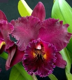 "Blc. Chia Lin ""New City"" - AD"