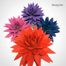 Echeveria colors